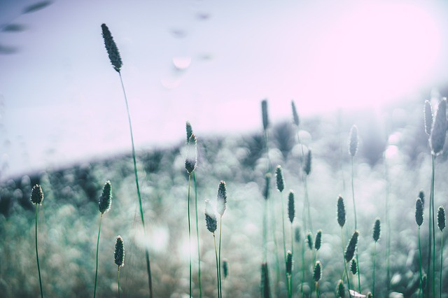 grass-828706_640