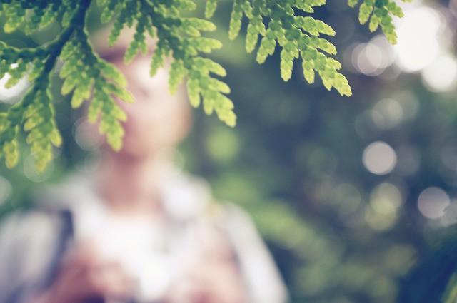 leaves-692010_640