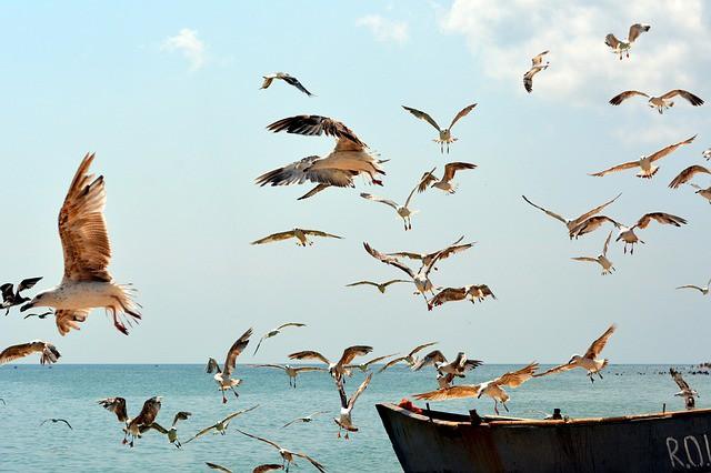 seagull-754462_640